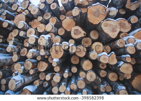 Pine timber stacked at lumber yard, woodpile of cut Lumber for forestry industry, Wooden Logs with Forest on Background,Trunks of trees cut and stacked - stock photo