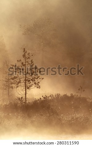 Pine tree at the bank of small pond at spring morning in Southern Finland.  - stock photo