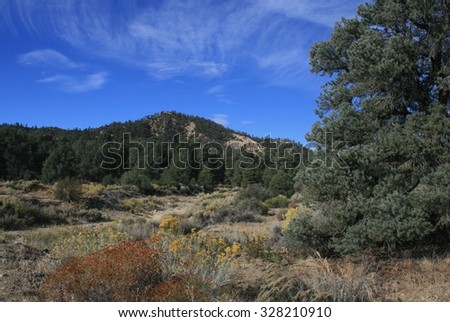 Pine tree at the edge of a meadow, high desert, California - stock photo