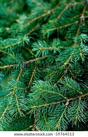 pine tree background - stock photo