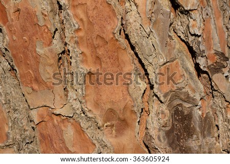 pine tree bark in close up.isolated  The bark is rough and cracked. it's color is brown and grey