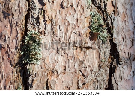 Pine tree bark texture, close-up - stock photo