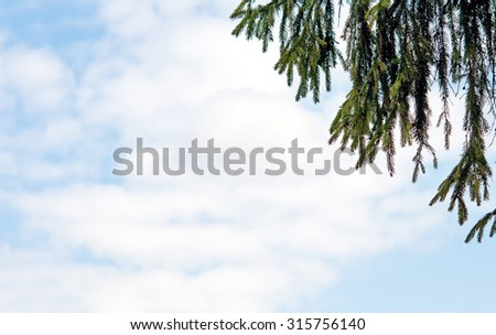 pine tree branch above blue clear sky background - stock photo