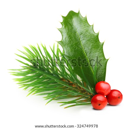 Pine tree branch and Holly berry leaves. Christmas decoration isolated on white background. - stock photo