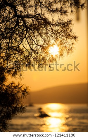 Pine tree branch and sunset in Croatia - stock photo