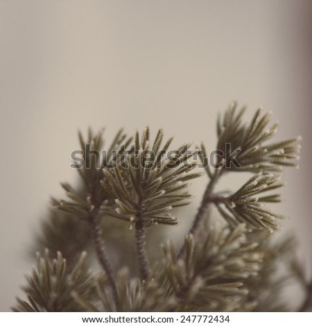 pine tree branch closeup with blur background in frosty winter morning - aged photo effect, vintage retro