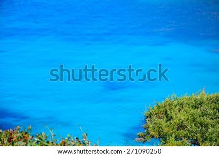 pine tree by Capo Testa blue water, Sardinia - stock photo