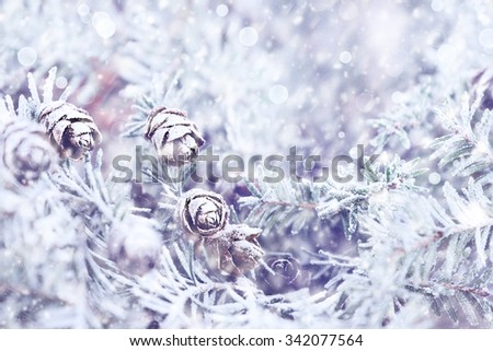 Pine tree covered with frost, blue toned. Extreme shallow depth of field with selective focus on center pine cone. - stock photo