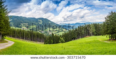 Pine tree forest in the montains - stock photo