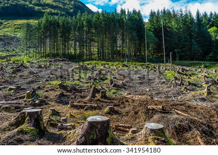 Pine tree forestry exploitation in a sunny day near Glencoe, in the Highlands of Scotland. Stumps and logs show that overexploitation leads to deforestation endangering environment and sustainability. - stock photo