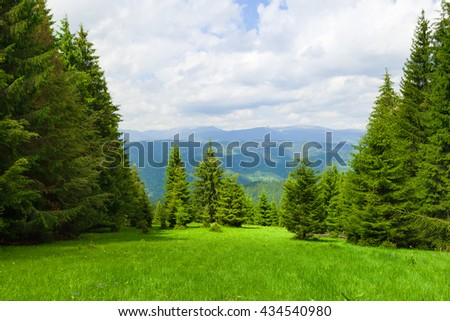 Pine Tree Forrest in the Montains, Romania - stock photo