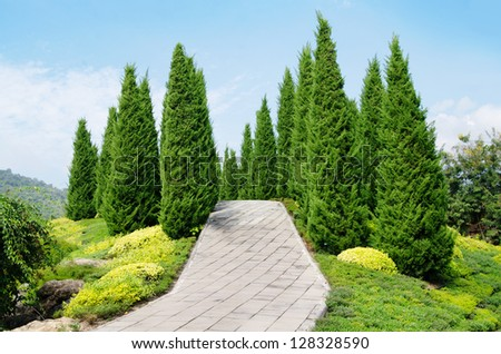 pine tree garden-blue sky - stock photo