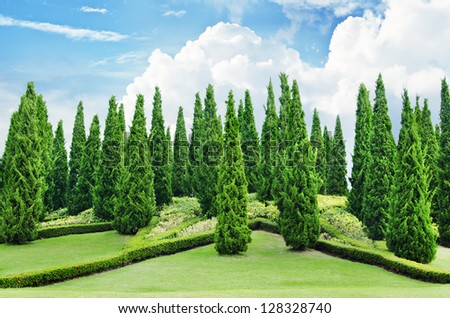 Charming Pine Tree Garden Blue Sky