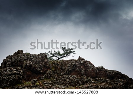 Pine tree growing on rock cliff mountain under stormy cloudy sky. - stock photo