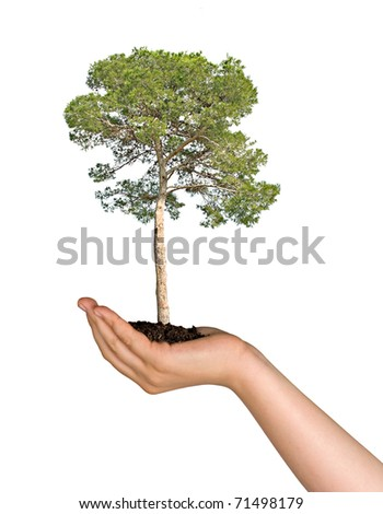 Pine tree in hand as a symbol of nature protection - stock photo