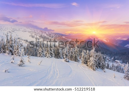pine tree in winter at sunset in the mountains. Purple sky