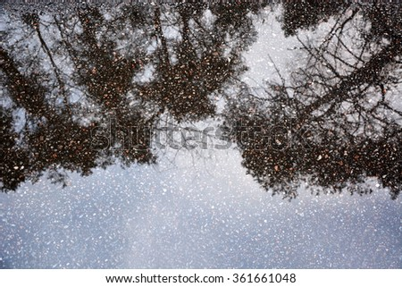 Pine tree reflections at the puddle - stock photo