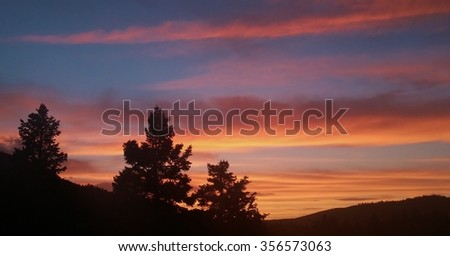 Pine Tree Sunset Silhouette in the Mountains of Utah
