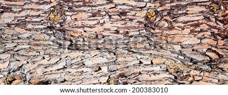 pine-tree texture - stock photo