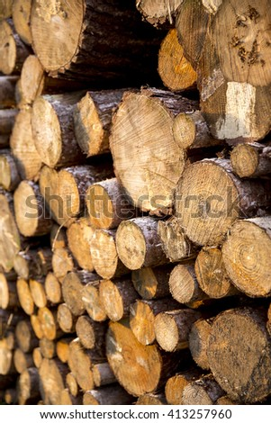 Pine tree timber log stack, left to season over winter from forestry activities. Photographed in evening sun from an angle. - stock photo