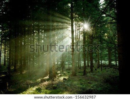 Pine tree with lights and fog