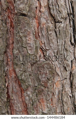 pine tree wooden surface