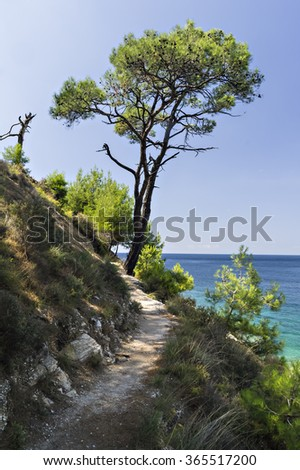 Pine trees along the path at the Aegean seashore in Aliki, Greece, Thassos island