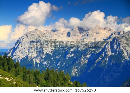 Pine trees and meadow and grey mountains in the background, Dolomite Alps, Italy - stock photo
