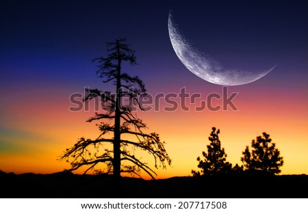 Pine trees and sunrise with moon in the mountains - stock photo