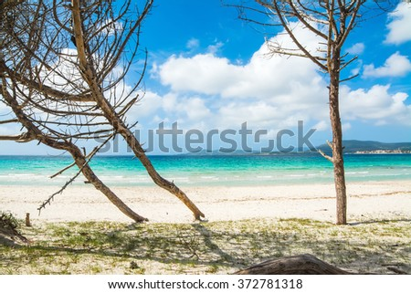 pine trees by the sea in Sardinia, Italy - stock photo