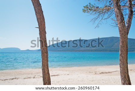 pine trees by the shore in Mugoni beach - stock photo