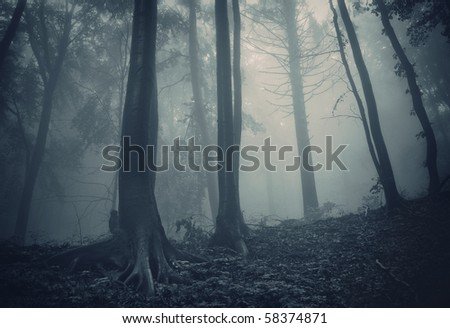 pine trees in a dark forest with green fog - stock photo