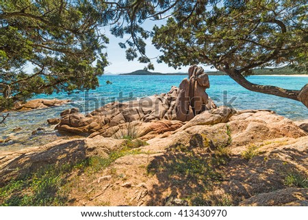 pine trees in Liscia Ruja beach in Costa Smeralda, Italy - stock photo