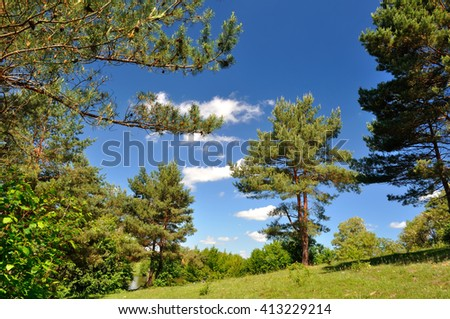 Pine trees on summer lawn - stock photo