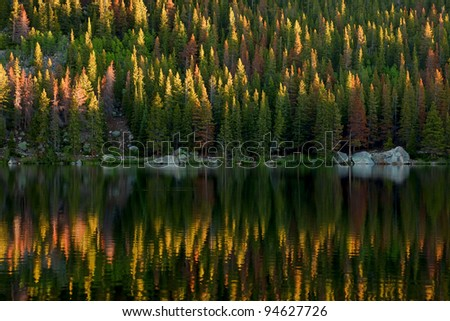 Pine trees reflected in water - stock photo