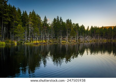 Pine trees reflecting in a pond in White Mountain National Forest, New Hampshire. - stock photo