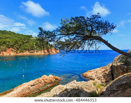 Pine trees with cones on rocky coast above sea.