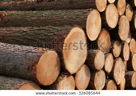 pine trunks - stock photo