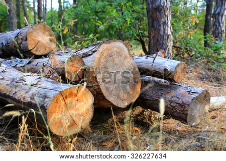 pine wood logs in forest - stock photo