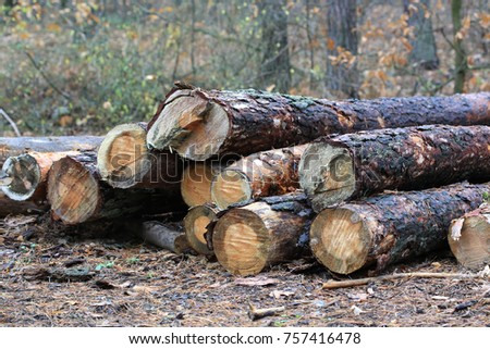pine wooden logs in forest
