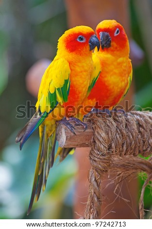 Yellow bird stock images royalty free images vectors for Cocktail yellow bird
