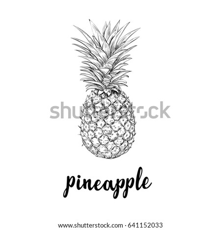 pineapple drawing. pineapple sketch is a vintage drawing. hand drawing illustration of pineapple. lettering