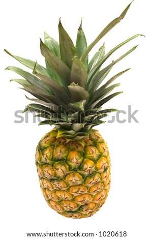 Pineapple w/ Path (Top View)