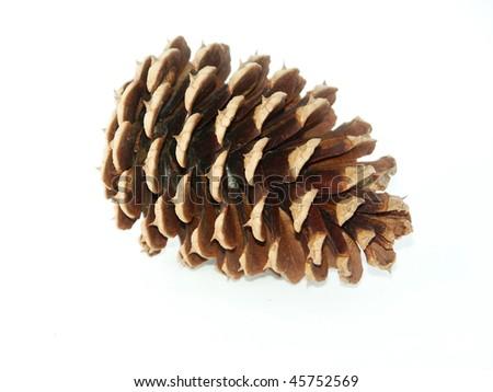 Pinecone - stock photo