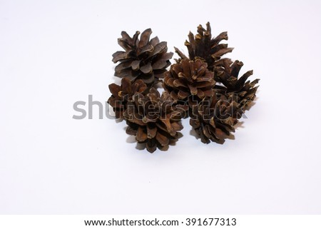 Pinecone in the white background
