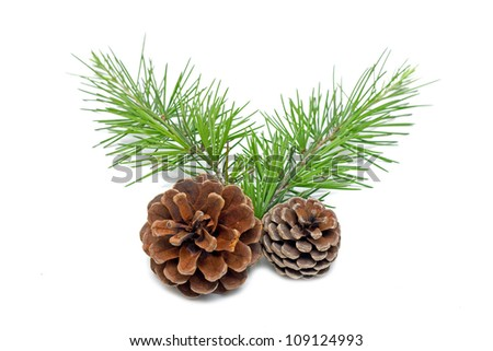 Pinecone isolated on white background