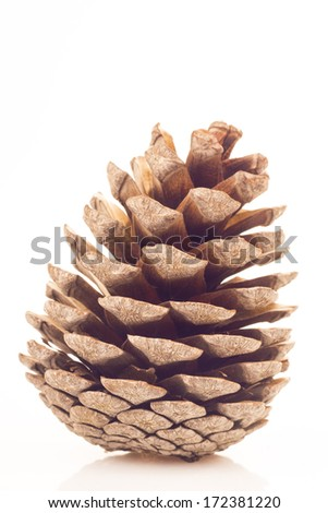 Pinecone isolated on white background - stock photo