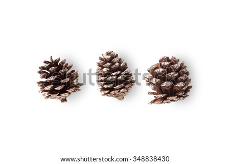 pinecone on white background  - stock photo