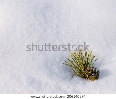 Pinecone with pine needles in a snow as copyspace background composition - stock photo