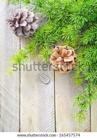 pinecones - stock photo